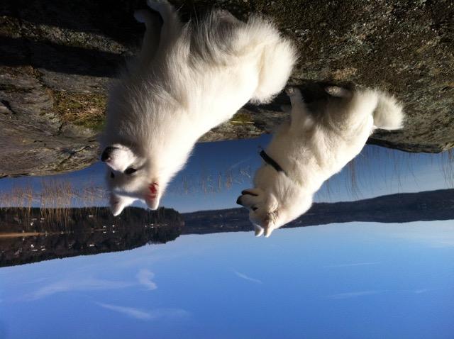 Japanska spetsarna. Alva och Gloria vid sjön Aspen