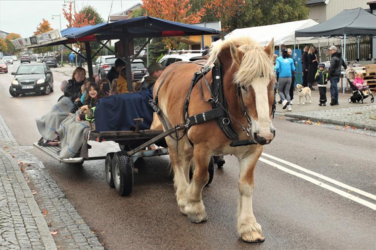 En sväng på Göteborgsvägen. Ardennern Nubbe var populär hos barnen och hästen har varit med på Höstmarknaden de senaste sex-sju åren.
