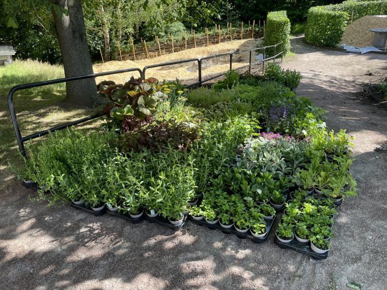 Växtrum börjar sakta men säkert ta form, snart dags för plantering av nya<br />blommor.