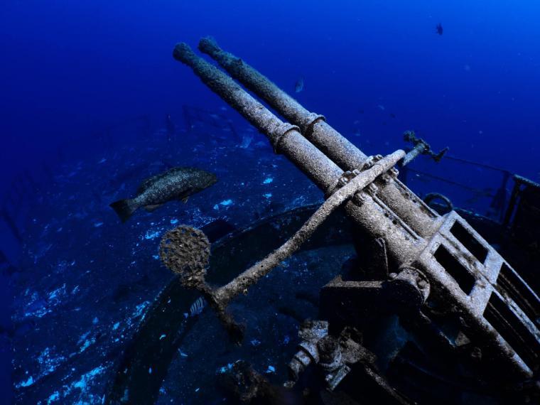 Undervattensfotografiet som blev VM-tvåa i kategorin \