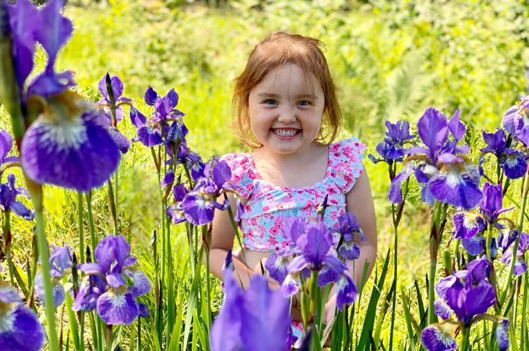 <span>Blomsterhav av violiris uppe hos morfar i Alsjön.</span>